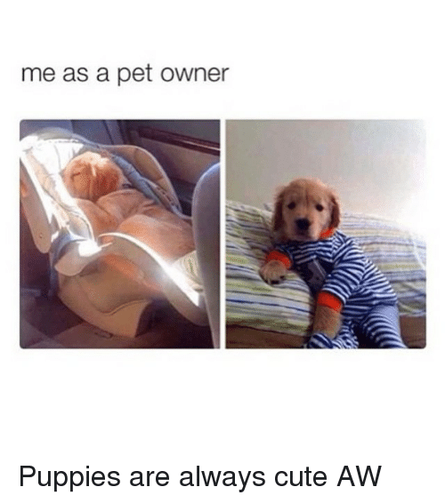 Cute, Puppies, and Pets: me as a pet owner Puppies are always cute AW
