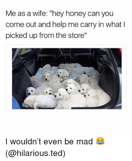 "Memes, Ted, and Help: Me as a wife: ""hey honey can you  come out and help me carry in what l  picked up from the store"" I wouldn't even be mad 😂 (@hilarious.ted)"