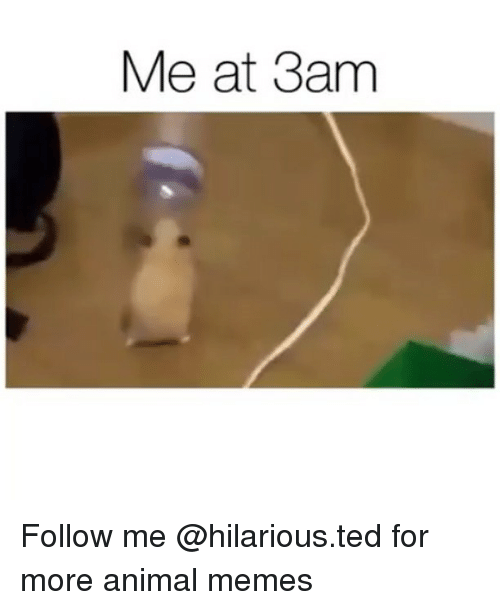 Funny, Memes, and Ted: Me at 3am Follow me @hilarious.ted for more animal memes