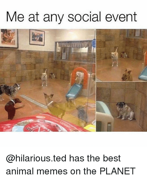 Memes, Ted, and Animal: Me at any social event @hilarious.ted has the best animal memes on the PLANET