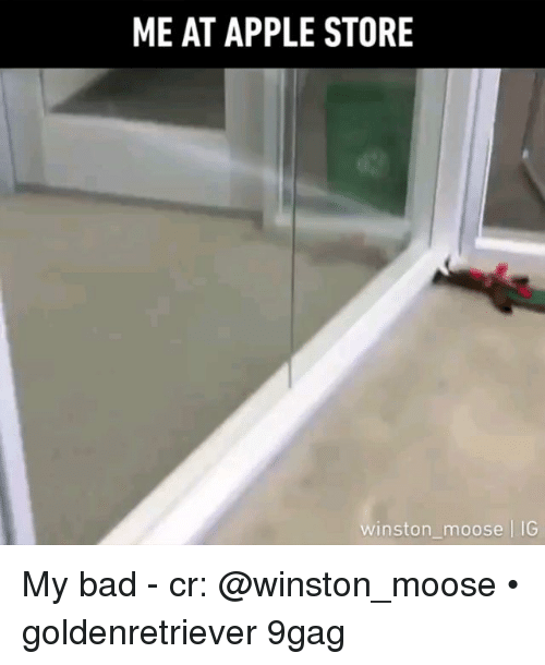 9gag, Apple, and Bad: ME AT APPLE STORE  winston moose |IG My bad - cr: @winston_moose • goldenretriever 9gag