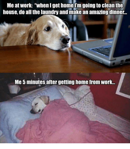 me at work when i get home im going to 5355169 ✅ 25 best memes about cat stalking cat stalking memes,Get Home Meme