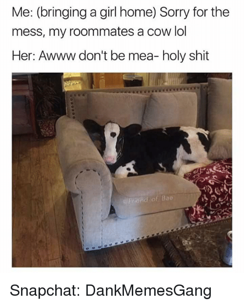 Bae, Lol, and Memes: Me: (bringing a girl home) Sorry for the  mess, my roommates a cow lol  Her: Awww don't be mea- holy shit  of Bae Snapchat: DankMemesGang