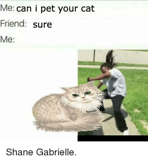 cat friend