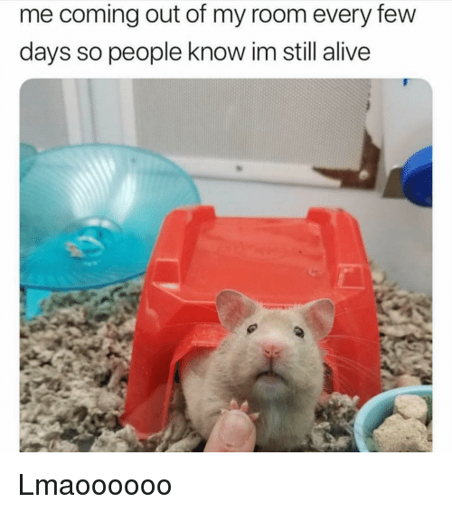 Alive, Memes, and 🤖: me coming out of my room every few  days so people know im still alive Lmaoooooo