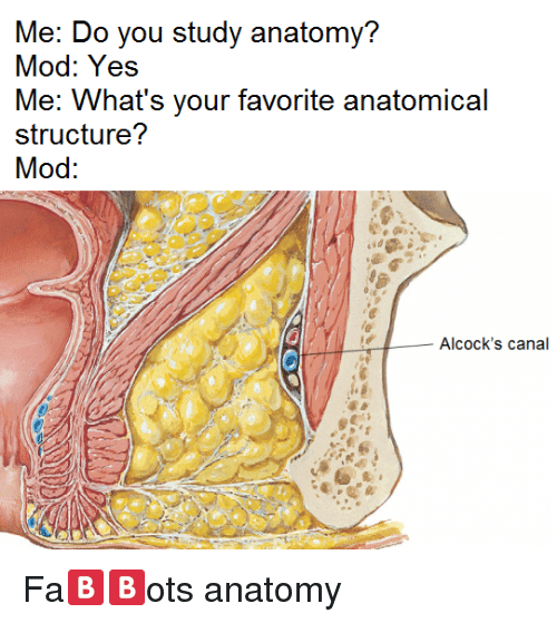 Me Do You Study Anatomy Mod Yes Me Whats Your Favorite Anatomical