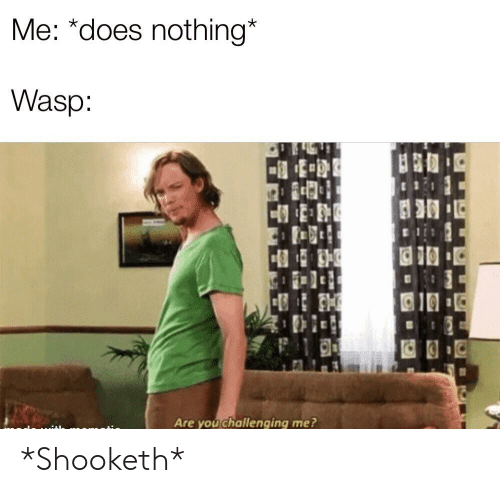 Wasp, You, and Nothing: Me: *does nothing*  Wasp  Are you challenging me? *Shooketh*