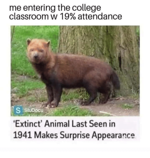 College, Animal, and Classroom: me entering the college  classroom w 19% attendance  24  S stuDocu  Extinct' Animal Last Seen in  1941 Makes Surprise Appearance