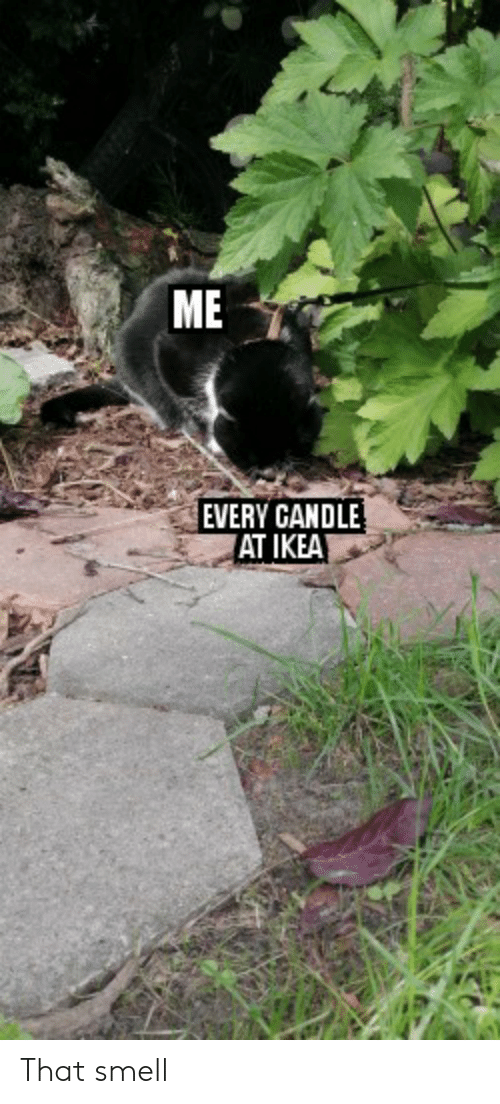 Ikea, Smell, and That: ME  EVERY CANDLE  AT IKEA That smell