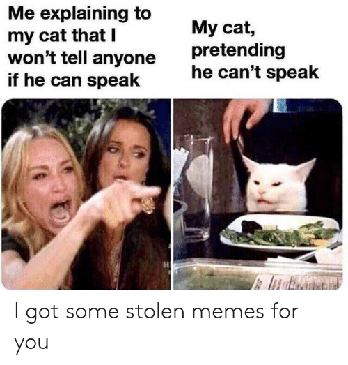 Memes, Got, and Cat: Me explaining to  my cat that I  won't tell anyone  if he can speak  My cat,  pretending  he can't speak I got some stolen memes for you