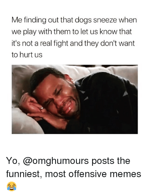 Dogs, Memes, and Yo: Me finding out that dogs sneeze when  we play with them to let us know that  it's not a real fight and they don't want  to hurt us Yo, @omghumours posts the funniest, most offensive memes 😂