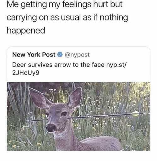 Deer, New York, and New York Post: Me getting my feelings hurt but  carrying on as usual as if nothing  happened  New York Post@nypost  Deer survives arrow to the face nyp.st/  2JHcUy9