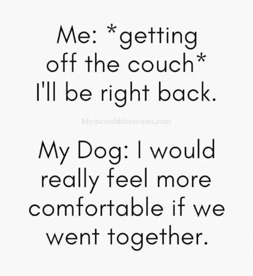 Comfortable, Dank, and Couch: Me: *getting  off the couch*  I'll be right back.  Myincrediblerecipes.com  My Dog: I would  really feel more  comfortable if we  wenT TogeTner.