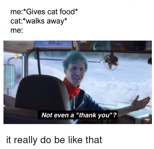 """Be Like, Food, and Funny: me:*Gives cat food*  cat:*walks away*  me:  Not even a """"thank you""""?"""