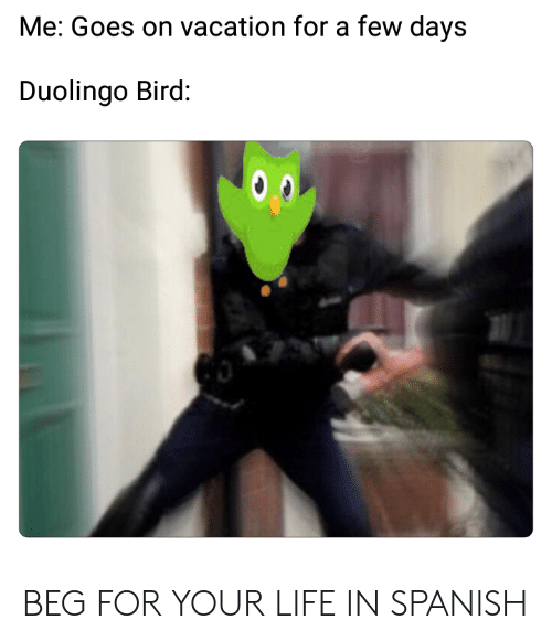 On Vacation For Few Days >> Me Goes On Vacation For A Few Days Duolingo Bird Beg For Your Life