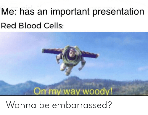 Me Has an Important Presentation Red Blood Cells on My Way