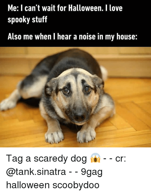 9gag, Halloween, and Love: Me: I can't wait for Halloween. I love  spooky stuf  Also me when I hear a noise in my house: Tag a scaredy dog 😱 - - cr: @tank.sinatra - - 9gag halloween scoobydoo