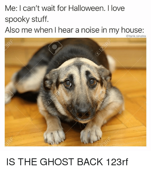 Funny, Halloween, and Love: Me: I can't wait for Halloween. I love  spooky stuff.  Also me when I hear a noise in my house:  @tank.sinatra  he IS THE GHOST BACK 123rf