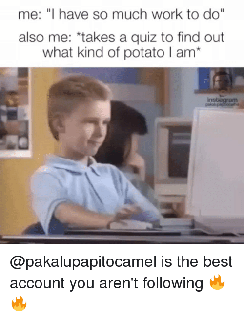 """Funny, Work, and Best: me: """"I have so much work to do""""  also me: *takes a quiz to find out  what kind of potato I am* @pakalupapitocamel is the best account you aren't following 🔥🔥"""
