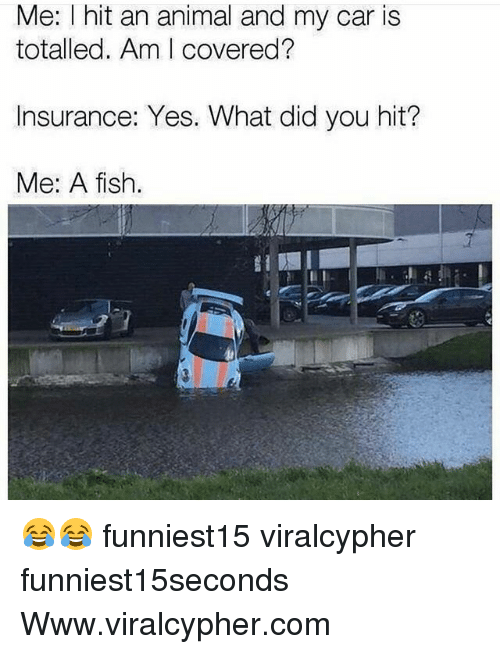 Me i hit an animal and my car is totalled am i covered for What kind of fish am i