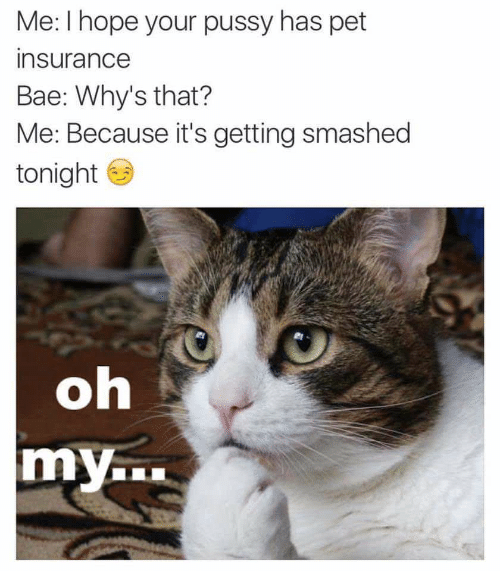 Bae, Pussy, and Hope: Me: I hope your pussy has pet  insurance  Bae: Why's that?  Me: Because it's getting smashed  tonight  oh  my.