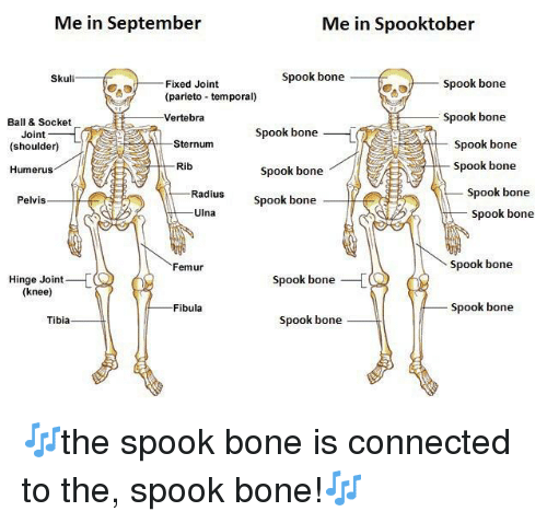 Connected, Skull, and Tibia: Me in September  Me in Spooktober  Skull  Spook bone  Spook bone  Fixed Joint  (parieto temporal)  Vertebra  Ball & Socket  Spook bone  Spook bone  Spook bone  Spook bone  Joint  (shoulder)  Sternum  Spook bone  Spook bone  Humerus  Rib  Spook bone  Spook bone  Radius  Pelvis  Ulna  Femur  Spook bone  Hinge Joint  (knee)  Spook bone  Fibula  Spook bone  Tibia  Spook bone 🎶the spook bone is connected to the, spook bone!🎶
