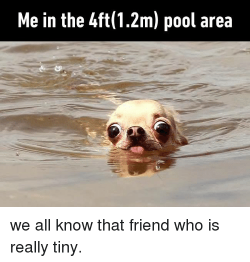 Dank, Pool, and 🤖: Me in the 4ft(1.2m) pool area we all know that friend who is really tiny.