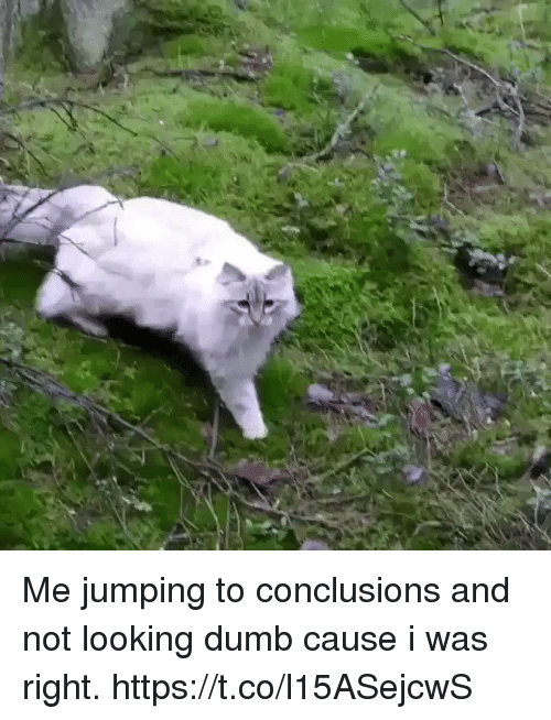 Dumb, Relatable, and Looking: Me jumping to conclusions and not looking dumb cause i was right. https://t.co/l15ASejcwS