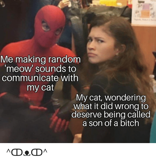 Bitch, Dank, and 🤖: Me making random  meow' sounds to  communicate with  my cat  My cat, wondering  what it did wrong to  deserve being called  a son of a bitch ^ↀᴥↀ^