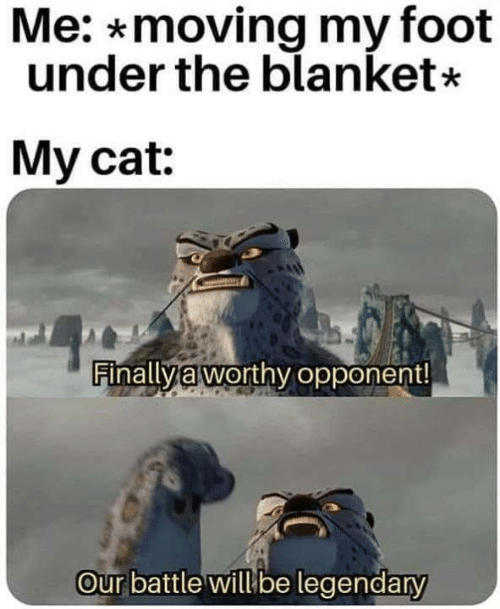 Memes, 🤖, and Cat: Me: *moving my foot  under the blanket*  My cat:  Finalla worthy opponent!  Our battle willbe legendary