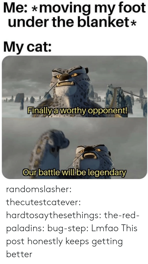 Gif, Tumblr, and Blog: Me: *moving my foot  under the blanket*  My cat:  Finally à worthy opponent  our battle willube legendary randomslasher:  thecutestcatever: hardtosaythesethings:  the-red-paladins:  bug-step:    Lmfao       This post honestly keeps getting better