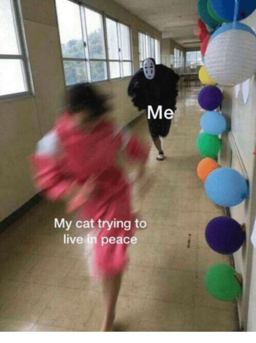 Memes, Live, and Peace: Me  My cat trying to  live in peace