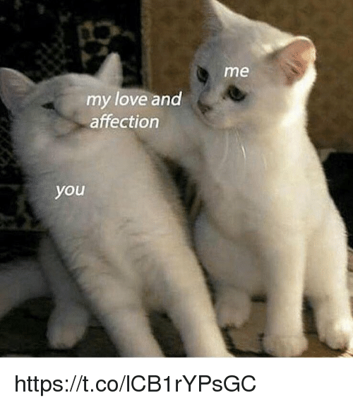 Love, Memes, and 🤖: me  my love and  affection  you https://t.co/lCB1rYPsGC