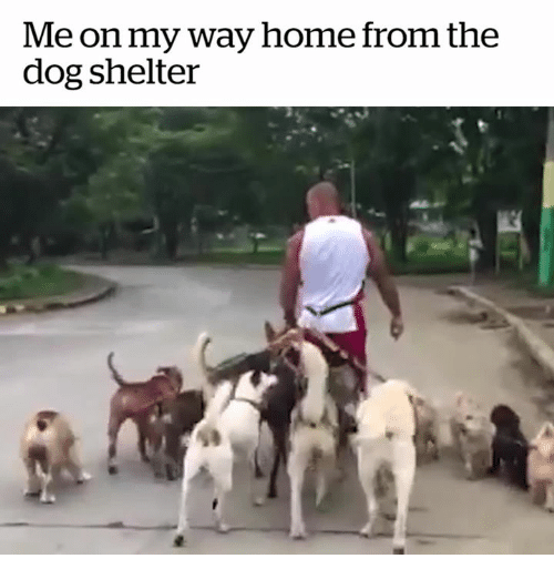 my way home dog rescue