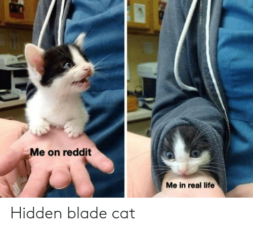 Me on Reddit Me in Real Life Hidden Blade Cat | Blade Meme