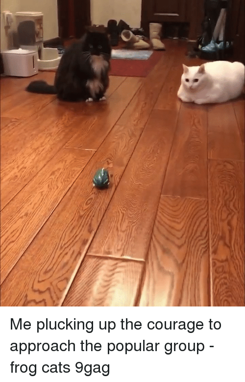 9gag, Cats, and Memes: Me plucking up the courage to approach the popular group - frog cats 9gag
