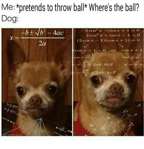 me pretends to throw ball wheres the ball dog con 16265168 ✅ 25 best memes about dog dog memes,Dank Memes Dog