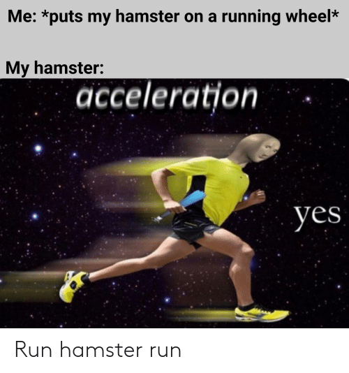 Me *Puts My Hamster on a Running Wheel* My Hamster Acceleration Yes