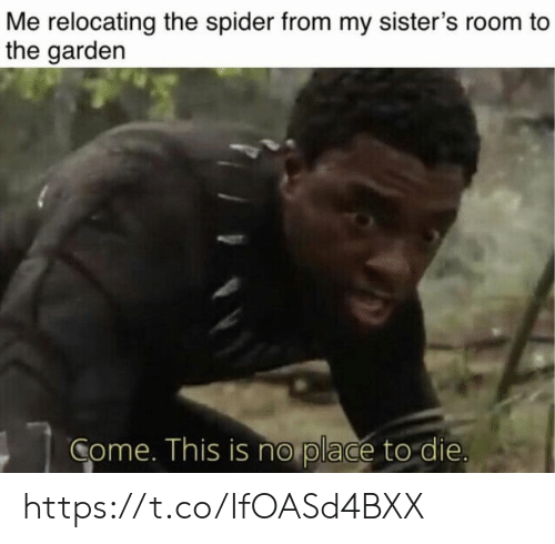 Memes, Spider, and 🤖: Me relocating the spider from my sister's room to  the gardern  Come. This is no place to die https://t.co/IfOASd4BXX