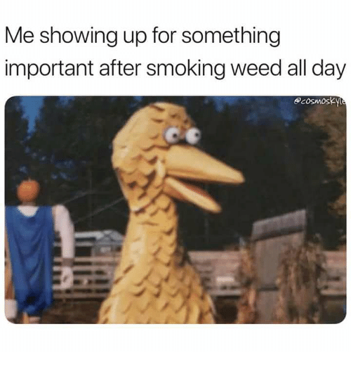 c5cff10457c Me Showing Up for Something Important After Smoking Weed All Day ...