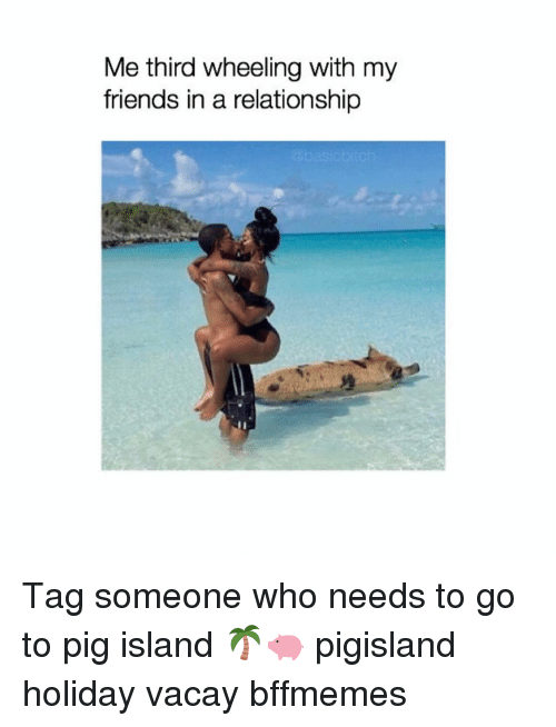 Friends, Girl, and Tag Someone: Me third wheeling with my  friends in a relationship Tag someone who needs to go to pig island 🌴🐖 pigisland holiday vacay bffmemes