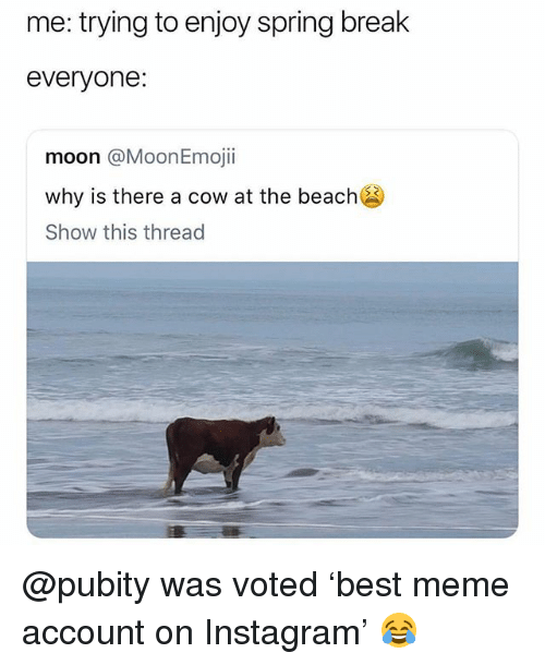 Instagram, Meme, and Beach: me: trying to enjoy spring brealk  everyone:  moon @MoonEmojii  why is there a cow at the beach  Show this thread @pubity was voted 'best meme account on Instagram' 😂