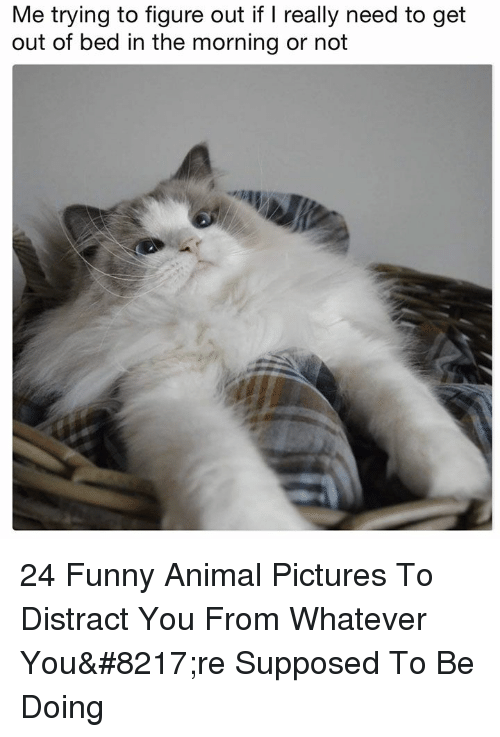 Funny, Animal, and Pictures: Me trying to figure out if I really need to get  out of bed in the morning or not 24 Funny Animal Pictures To Distract You From Whatever You're Supposed To Be Doing