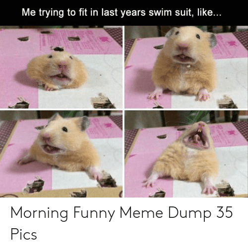 Funny, Meme, and Fit: Me trying to fit in last years swim suit, like Morning Funny Meme Dump 35 Pics