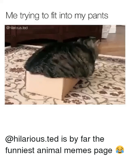 Memes, Ted, and Animal: Me trying to fit into my pants  @hilarious.ted @hilarious.ted is by far the funniest animal memes page 😂