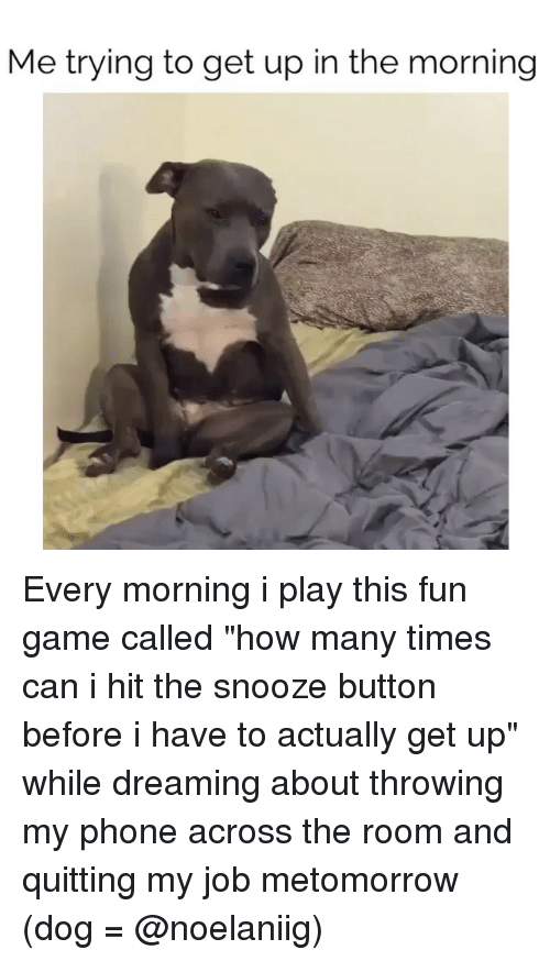 How Many Times Can You Apply To The Dog