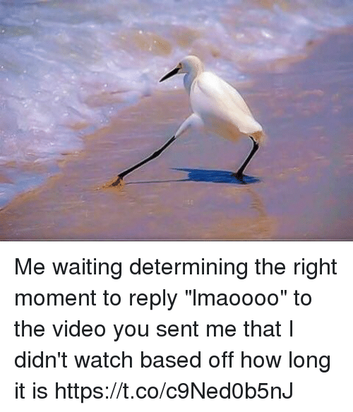 """Video, Watch, and Girl Memes: Me waiting determining the right moment to reply """"lmaoooo"""" to the video you sent me that I didn't watch based off how long it is https://t.co/c9Ned0b5nJ"""