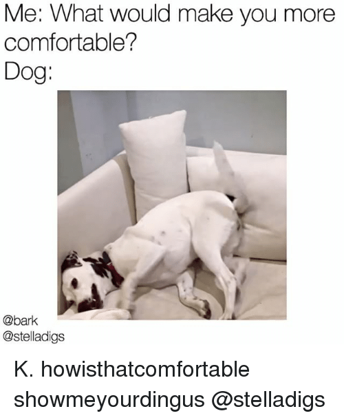 Comfortable, Memes, and 🤖: Me: What would make you more  comfortable?  Dog  @bark  @stelladigs K. howisthatcomfortable showmeyourdingus @stelladigs