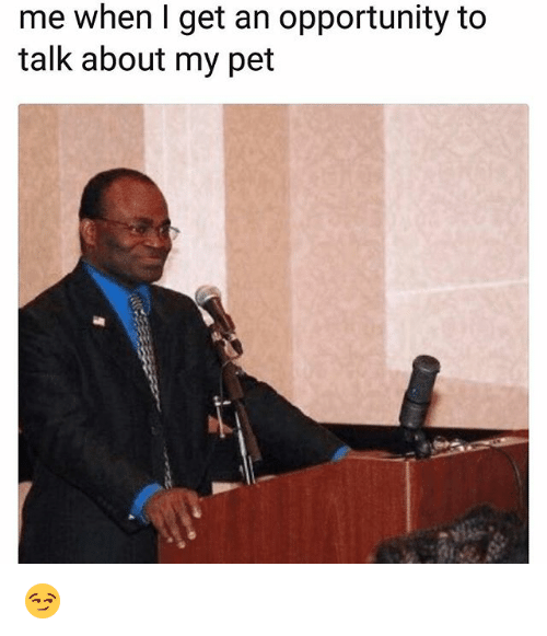 Funny, Opportunity, and Pet: me when I get an opportunity to  talk about my pet 😏