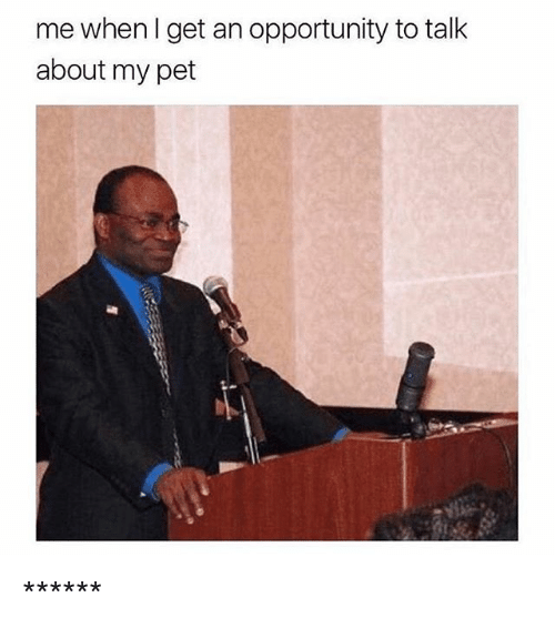 Opportunity, Girl Memes, and Pet: me when I get an opportunity to talk  about my pet ******